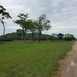 Roadfront to Belcampo Lodge